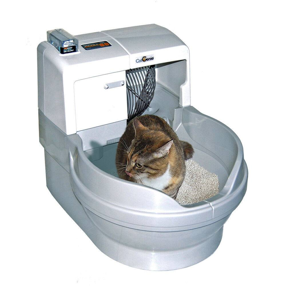 Лоток для кошек: виды, размеры и правила выбора