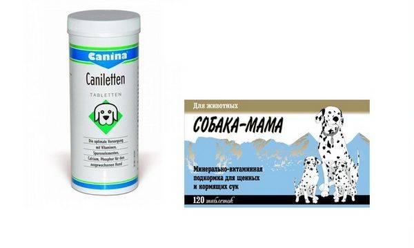 Витамины с кальцием для собак - обзор препаратов с инструкцией, дозировкой и ценой