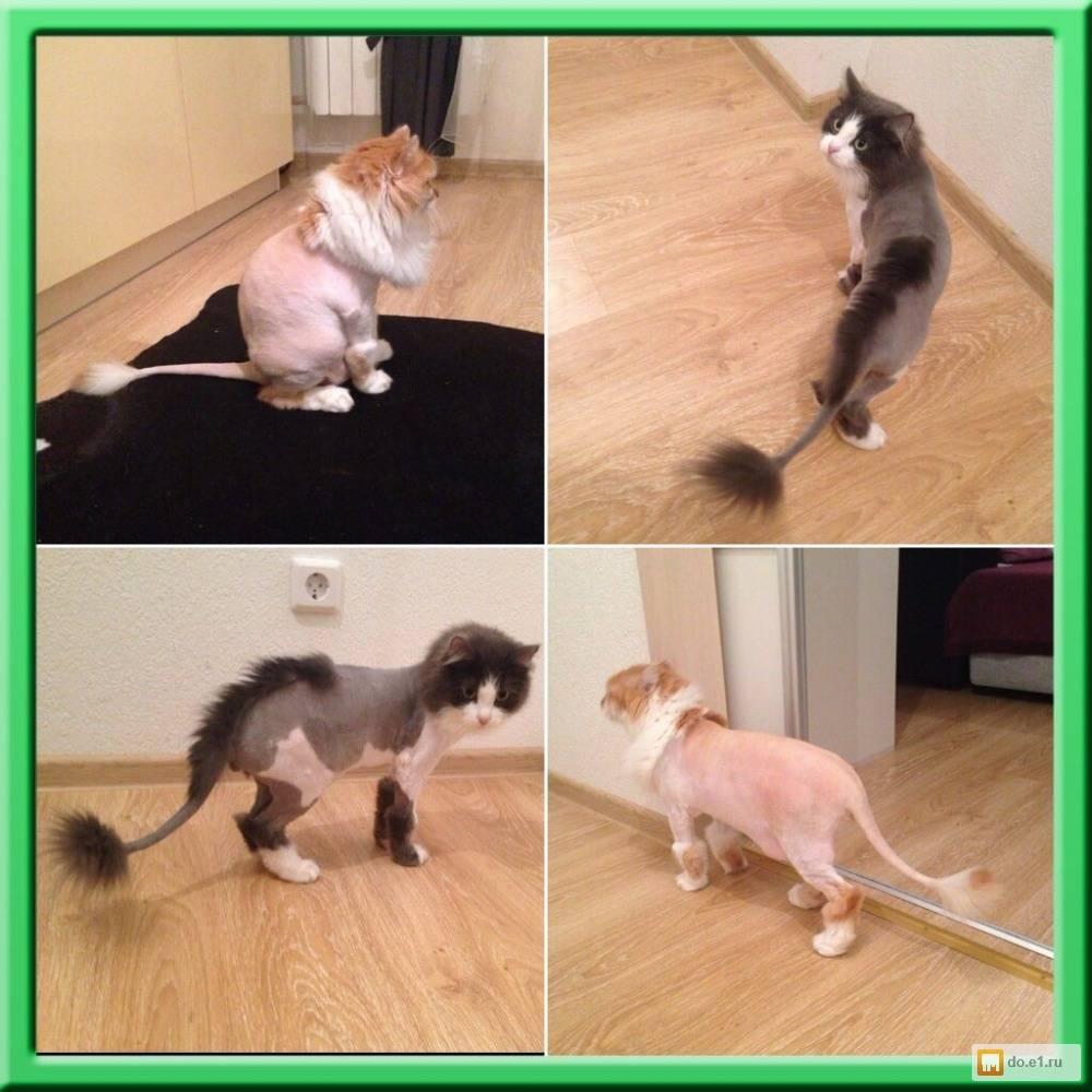 Линька у собак: что делать, когда питомец линяет, что такое экспресс линька, советы