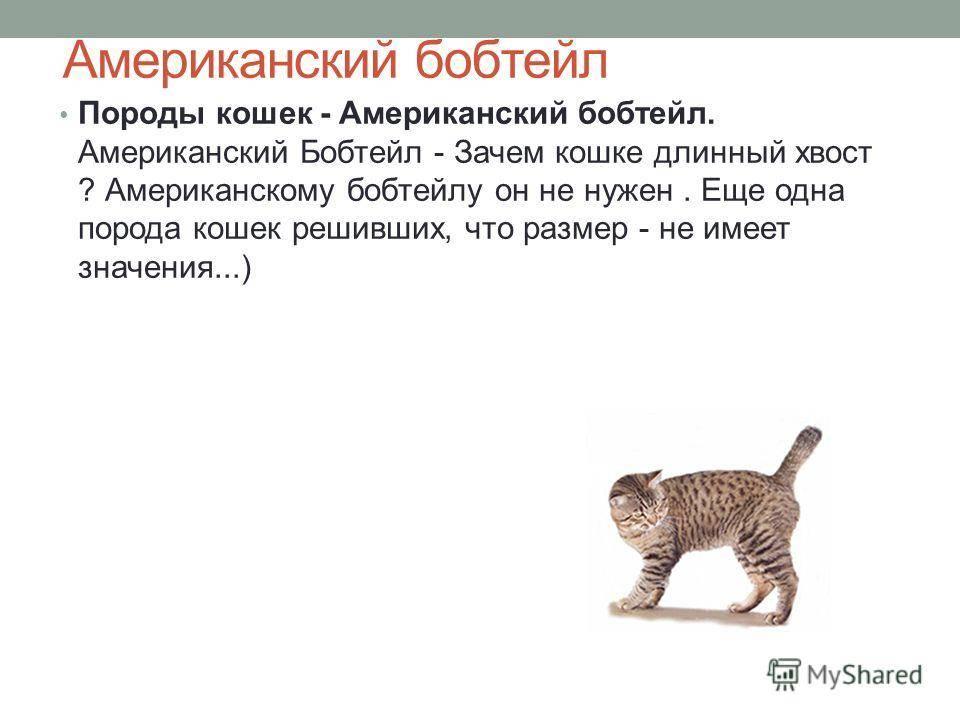 Зачем нужен хвост кошке и какое значение он имеет для животного?