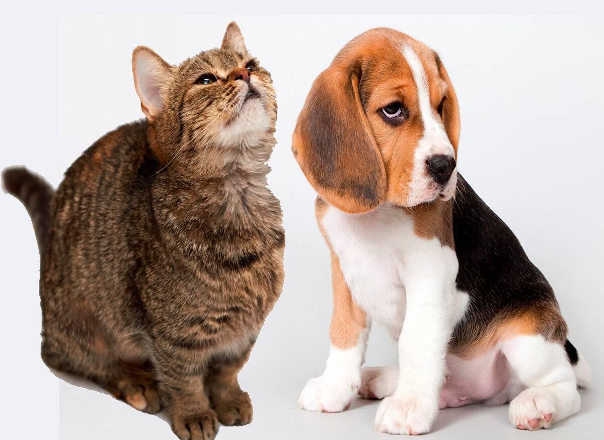 """Кого лучше завести — собаку или кошку? — """"сетевой"""" — журнал народной журналистики"""