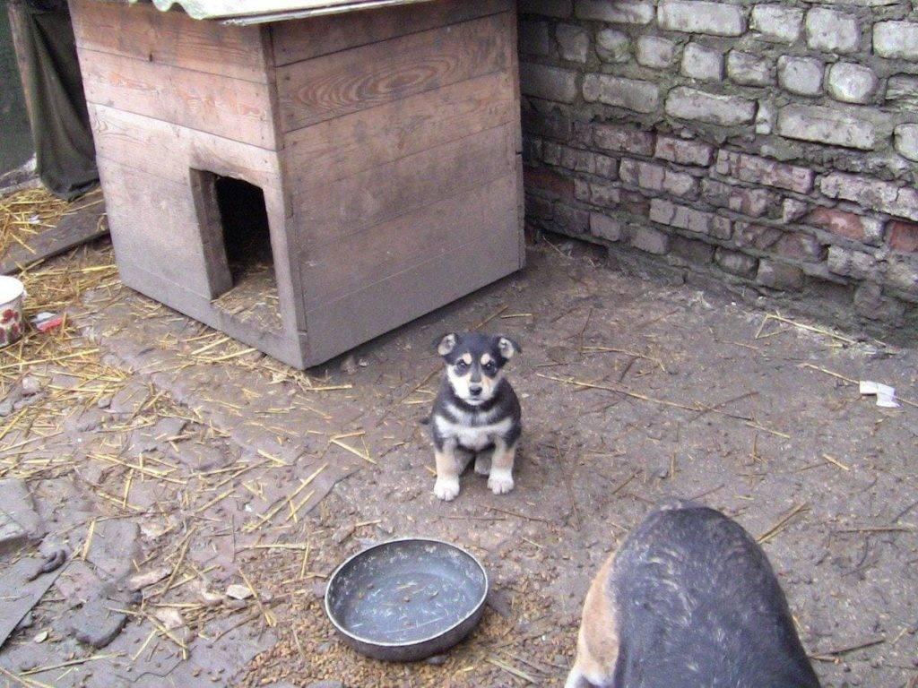 Почему собака не заходит в будку: порядок приучения к жизни во дворе
