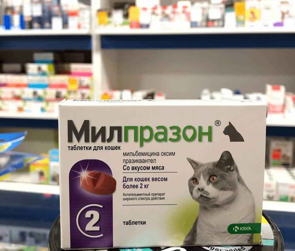 Милпразон для кошек: инструкция по применению, аналоги, отзывы