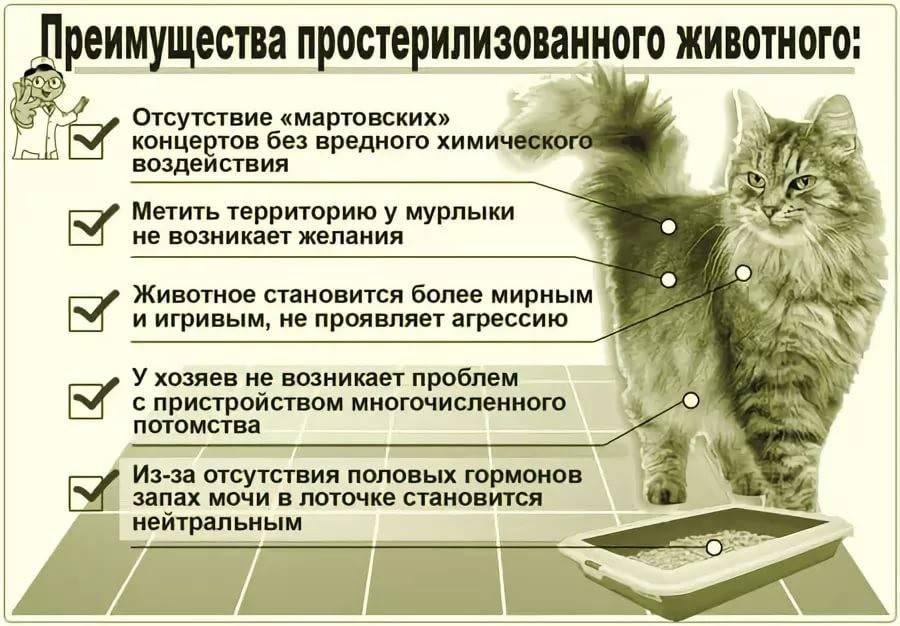 Когда над питомцем нависла опасность: внутреннее кровотечение у кошек