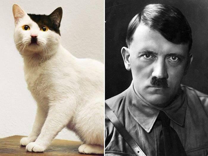 Любимые кошки знаменитостей
