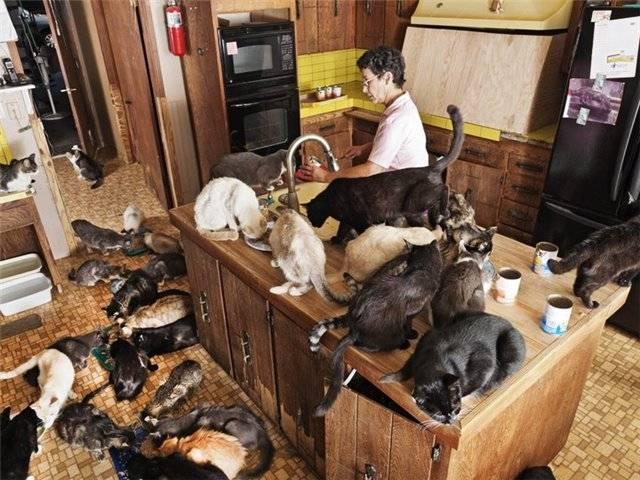 Собаки или кошки - кто лучше, их достоинства и недостатки, кого стоит завести