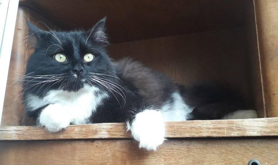 6 правил как приучить кота или кошку к новому дому