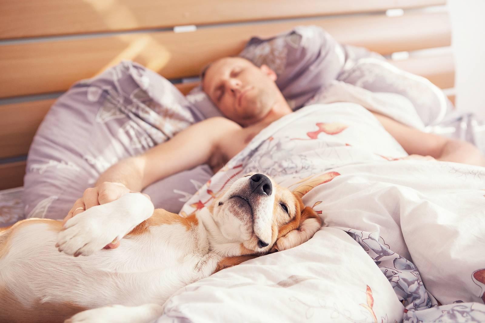 Спать с домашними животными полезно. почему нужно спать с питомцами