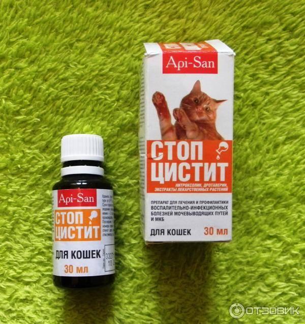Стоп-цистит для кошек: обзор препарата