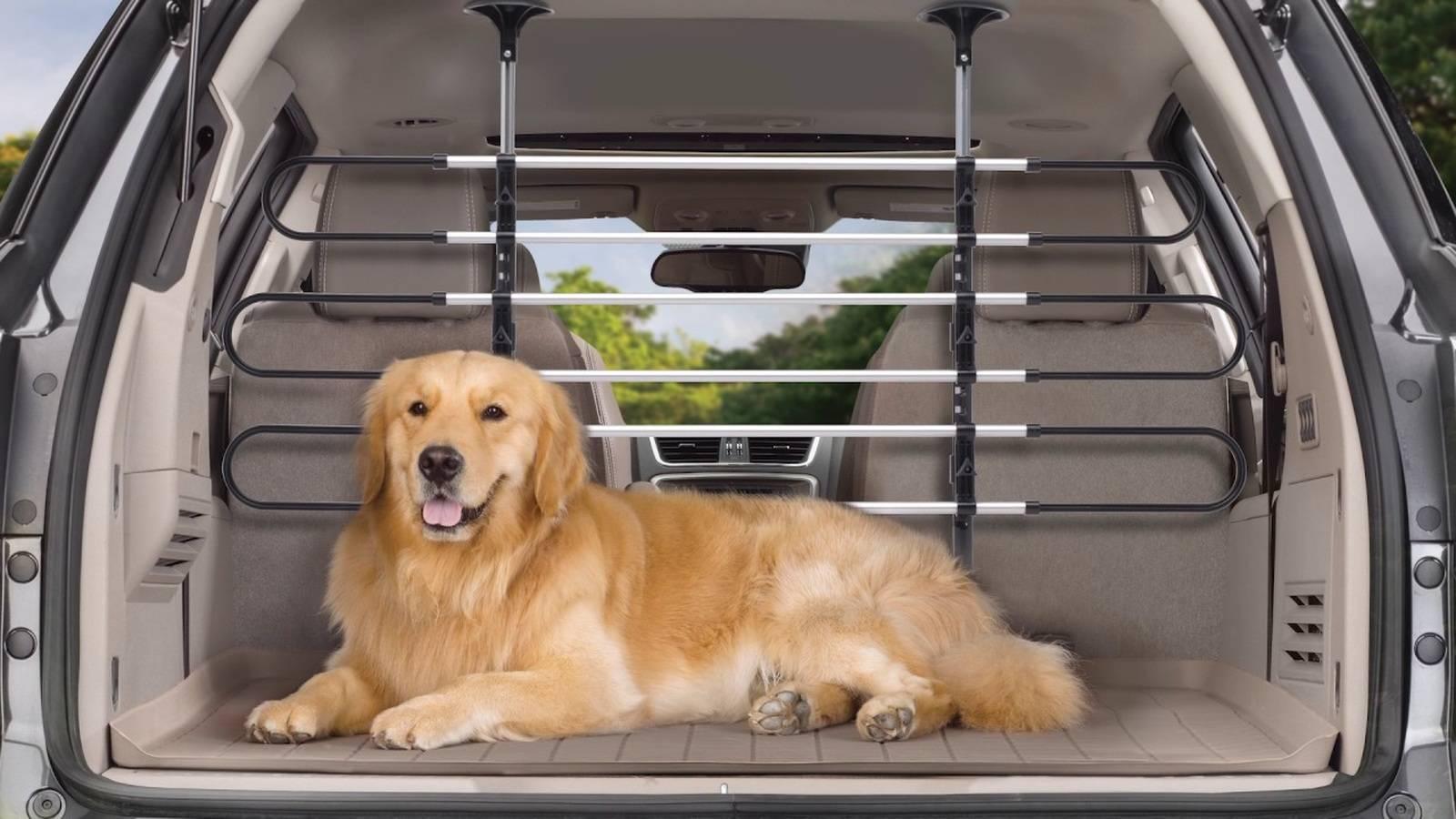 Как перевозить собаку в машине?: автогамак и клетки, чехлы и переноски в машину, с помощью которых можно перевозить собак