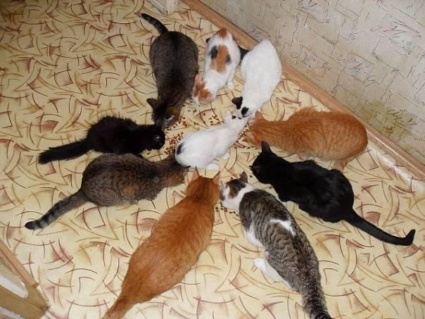 Кошка не ест и не пьет несколько дней, вялая, спит постоянно: почему это происходит и что делать?