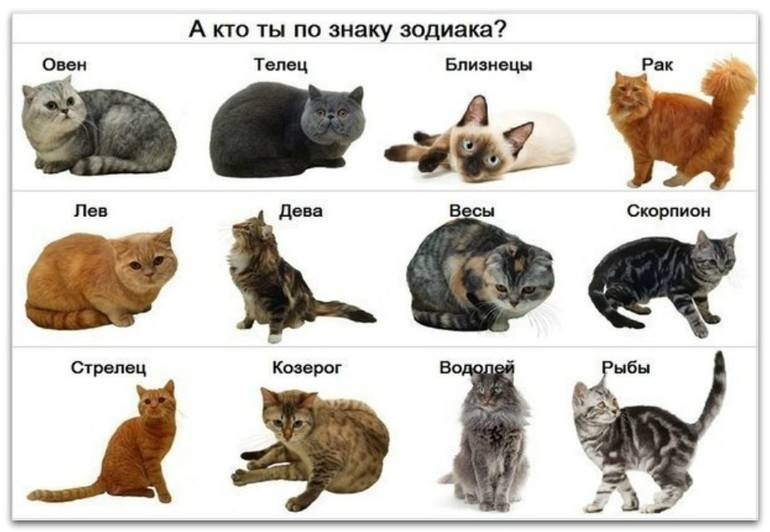 Животные по знакам Зодиака: кому какие подходят