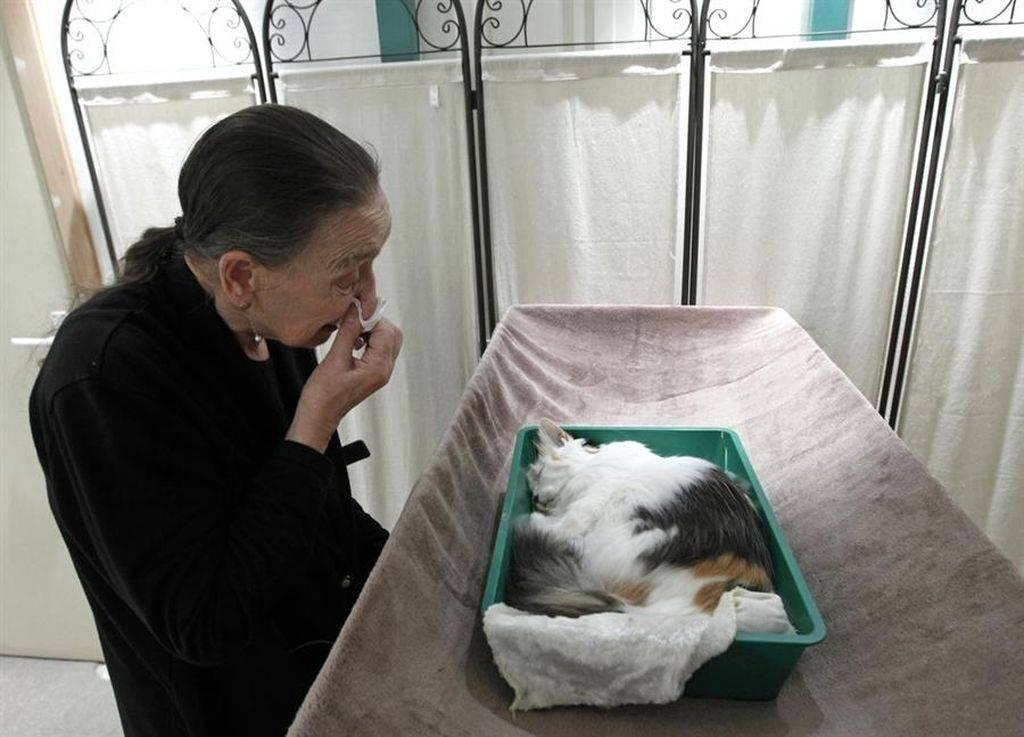 Где и как правильно похоронить кошку - oozoo.ru