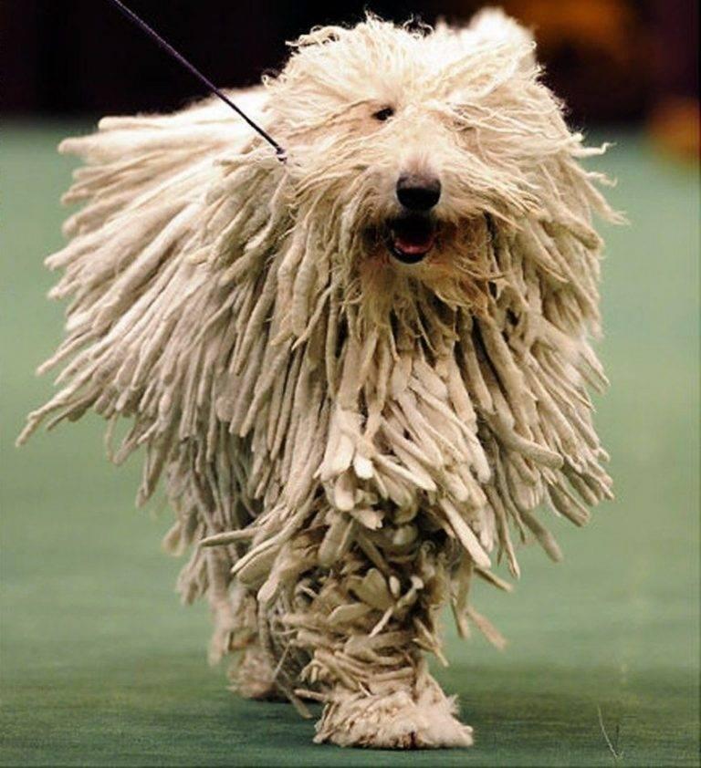 Дог - порода собак, ее представители с фото, описанием и названиями