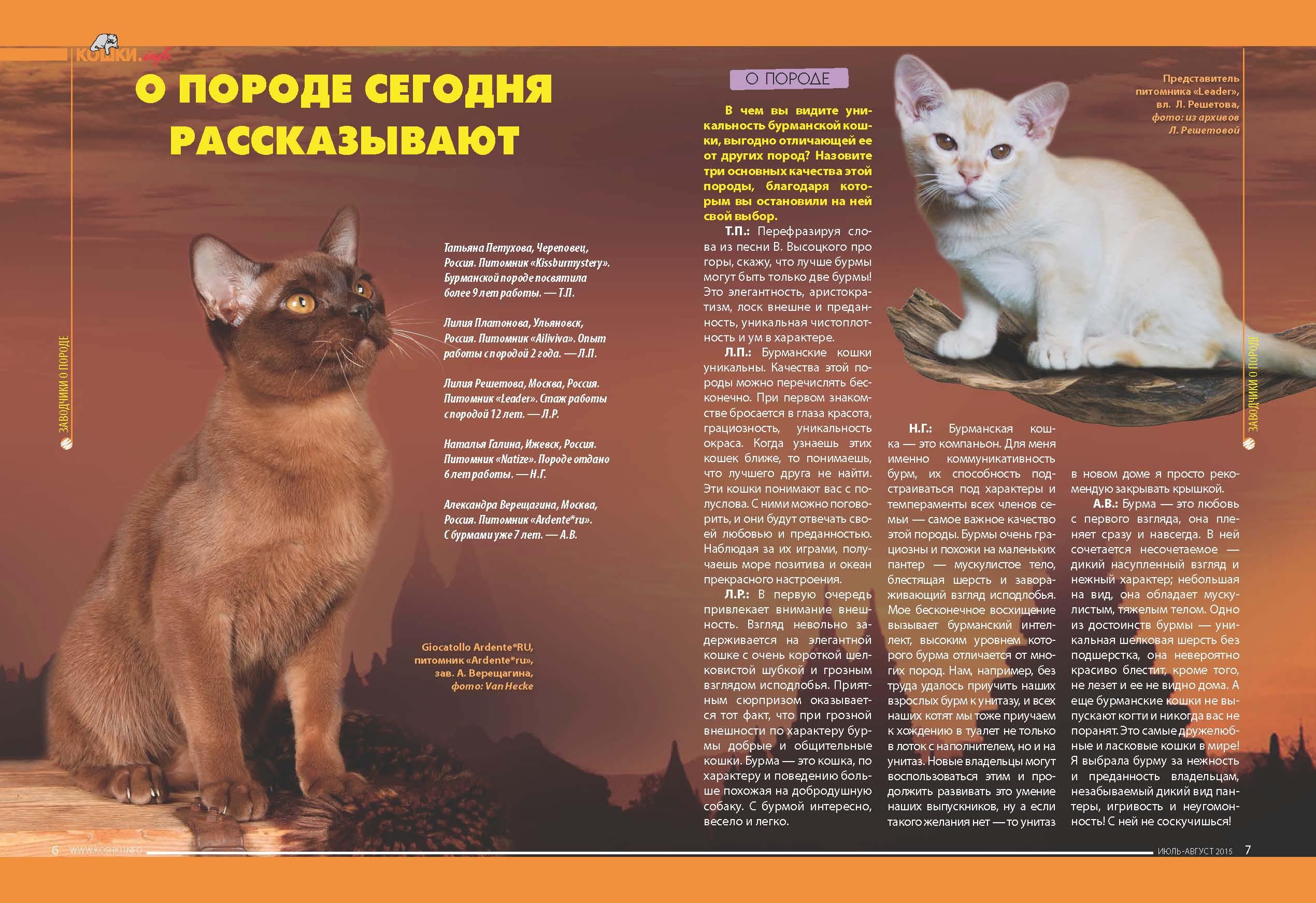 Самые злые кошки в мире: топ-10 наиболее агрессивных и злопамятных пород