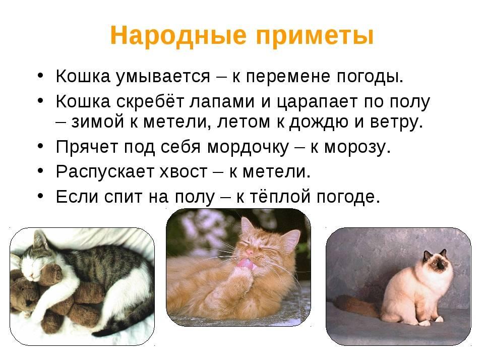 Как понять, что кошка умирает — симптомы и советы | домашние животные