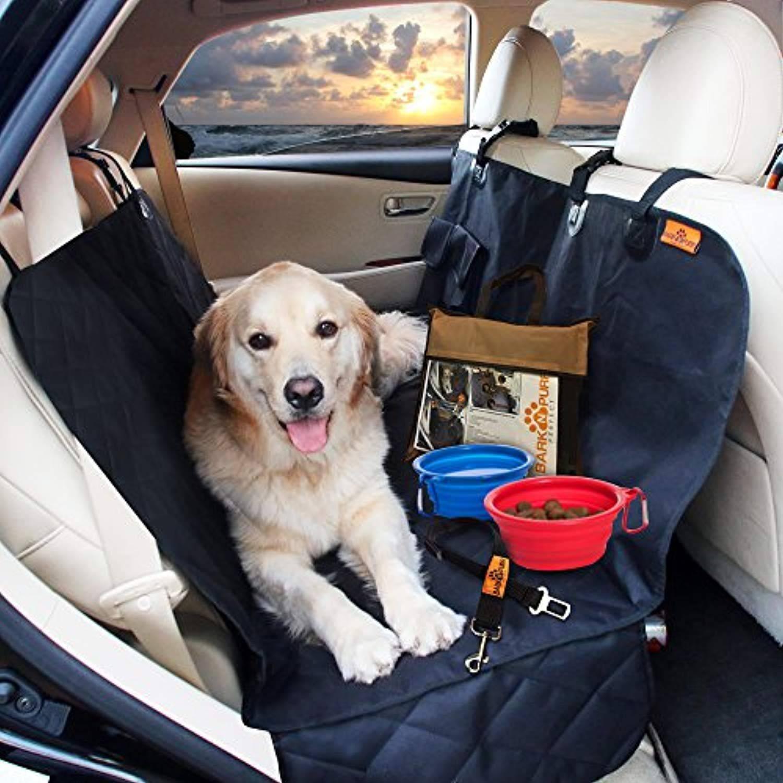 Вывоз собаки за границу: правила перевозки в самолете и на машине, необходимые документы для перевозки животного