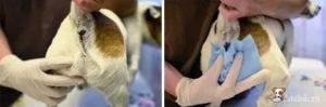 Кошка ходит в туалет с белыми выделениями: причины и лечение
