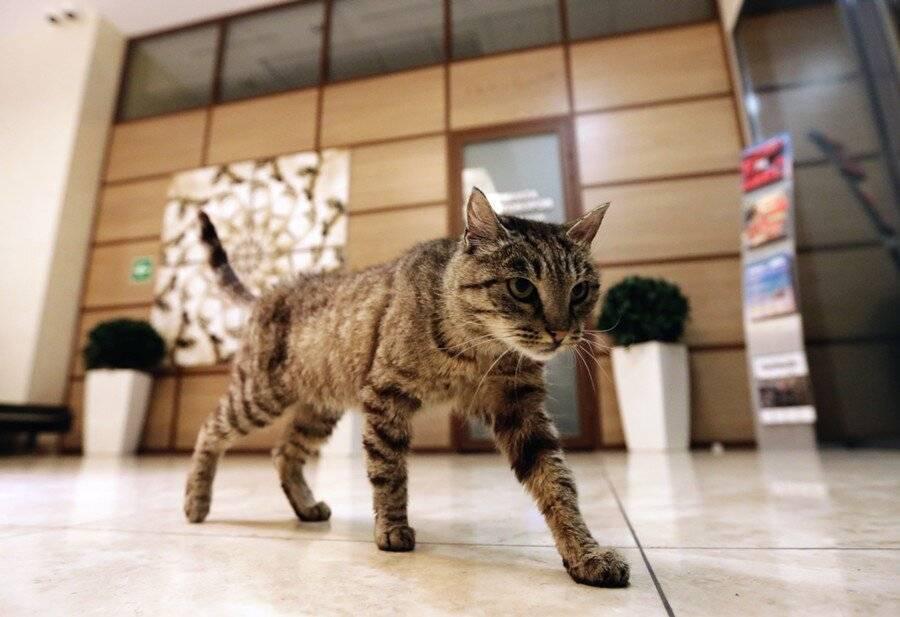 Почему кот (кошка) орет по ночам в квартире?