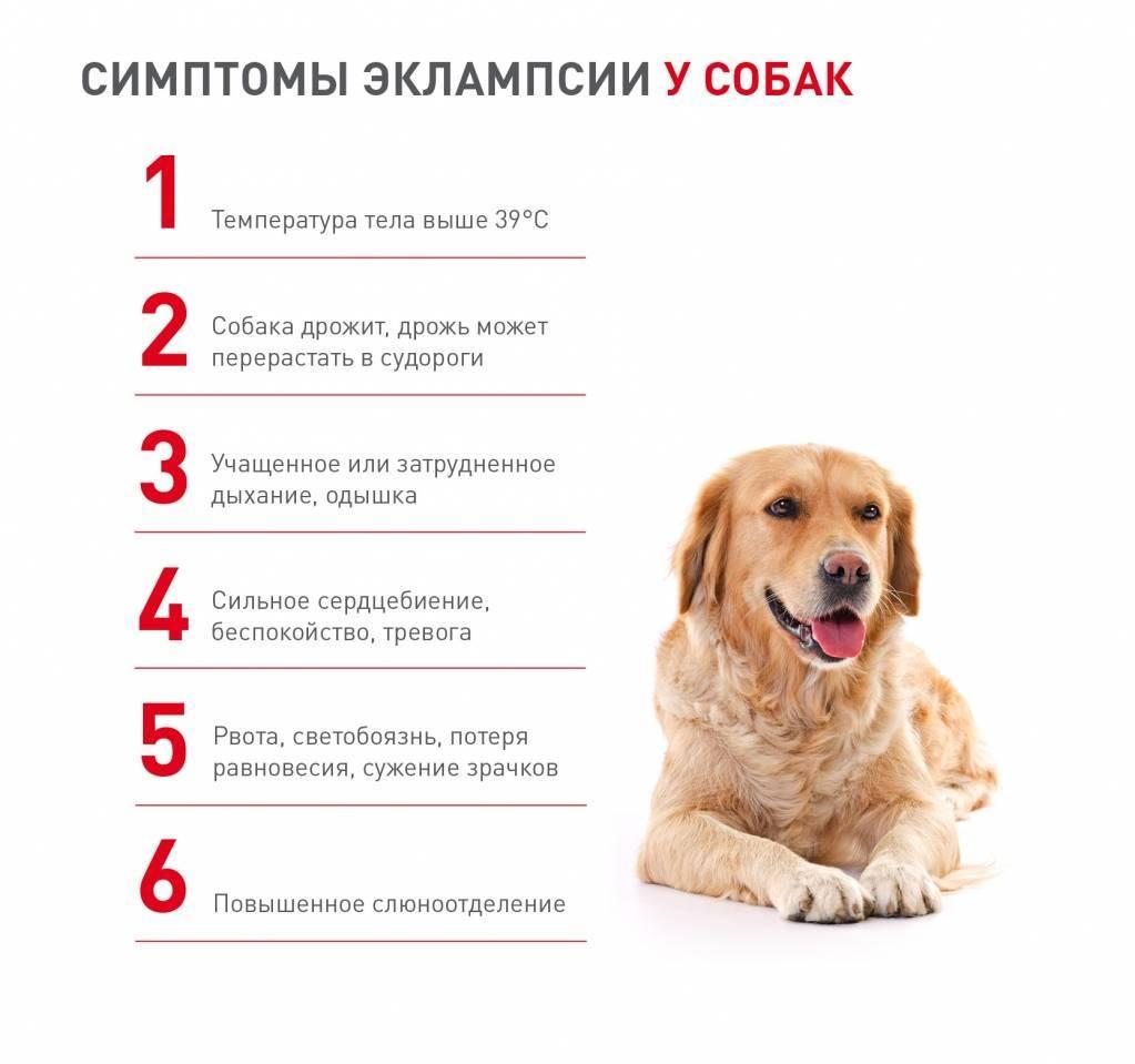 Сколько живут собаки и как продлить их жизнь