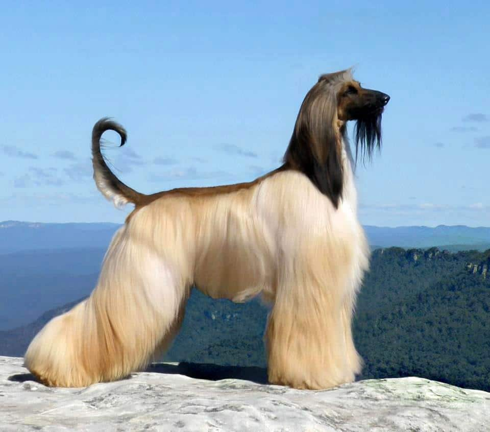 Породы собак, легко поддающиеся дрессировке. список 10 самых умных и легко дрессируемых пород собак - dogtricks.ru