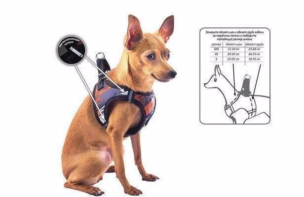 Зачем нужна шлейка для собак крупных и мелких пород, как выбрать и как одевать