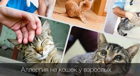 Аллергия на шерсть кошек и других животных
