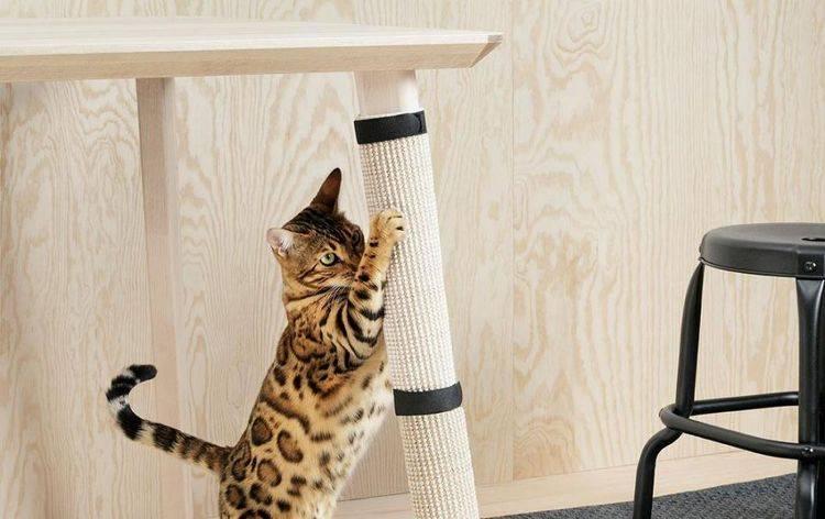 9 сервисов для домашних животных, которые облегчат жизнь их владельцам