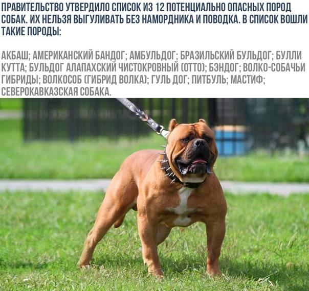 Список собак для выгула в наморднике по закону