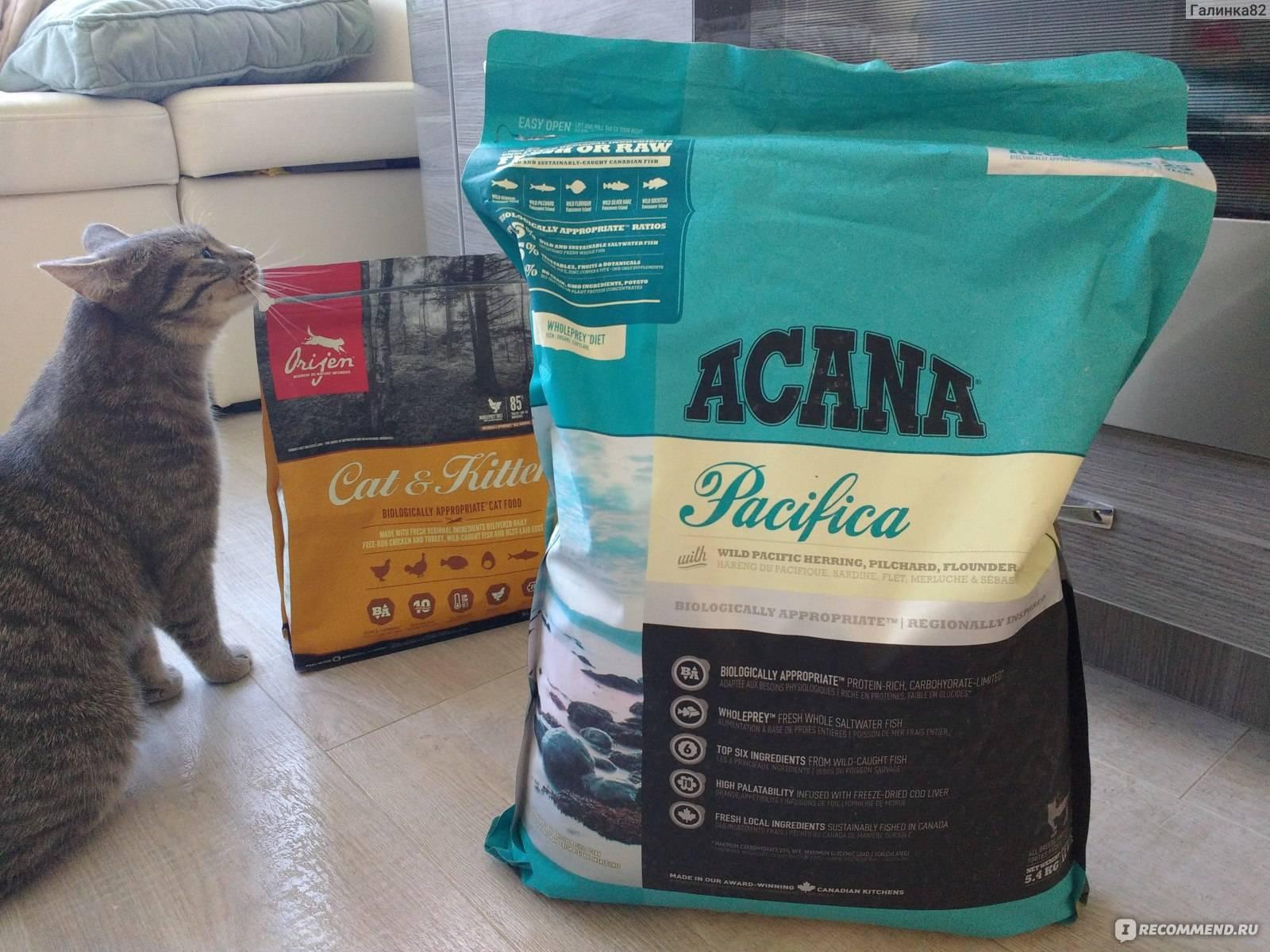 Акана корм для кошек: ассортимент предложения, отзывы ветеринаров о качественном рационе питания