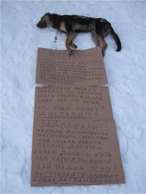 """Отравление собак крысиным ядом - симптомы и лечение отравления в москве. ветеринарная клиника """"зоостатус"""""""