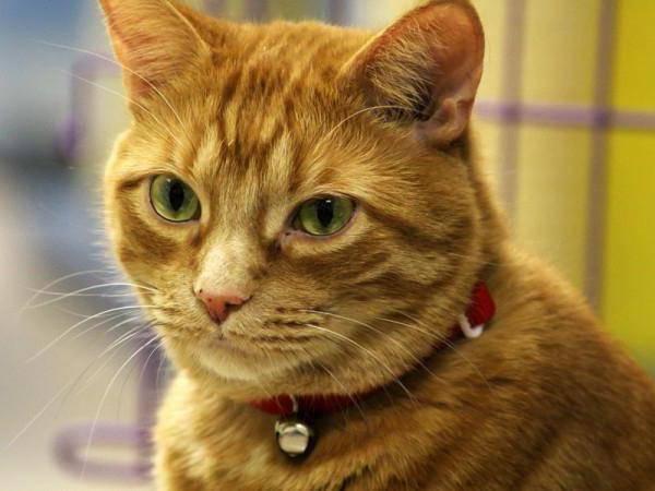 Зачем кошке усы и брови - почему нельзя их стричь, что будет если их обрезать, опалить