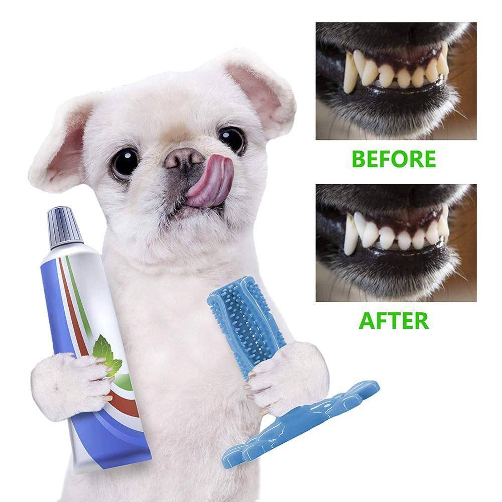 Как чистить зубы собаке — полезные советы | dogkind.ru
