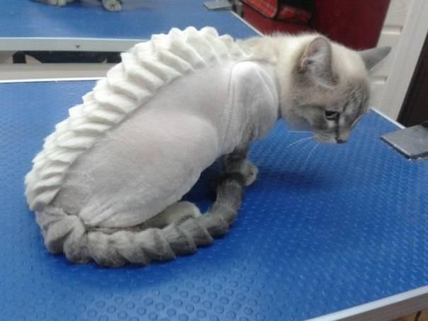 Как в домашних условиях подстричь кота?