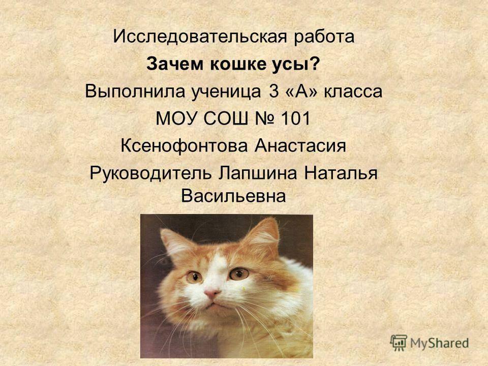 Какое значение имеет хвост для кошки