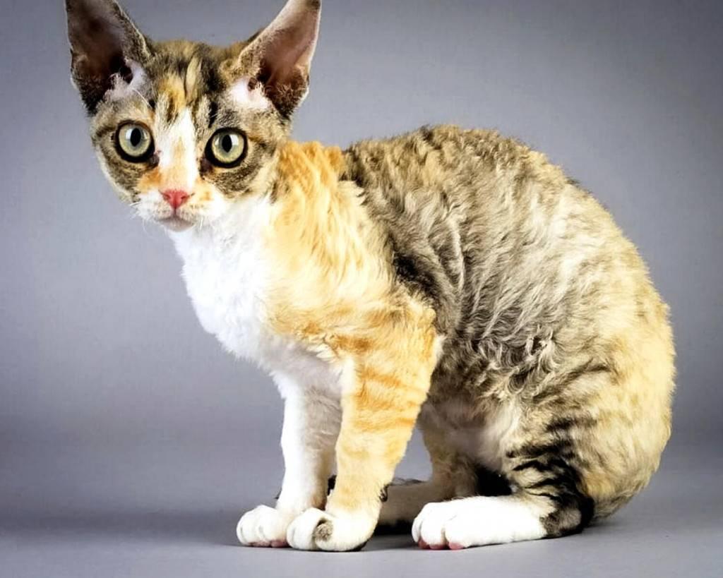 Домашние кошки: древние спутники человека