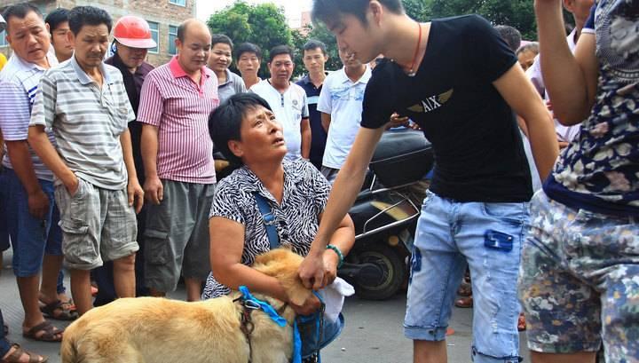 Korea 365.   собачьи дни в южной корее