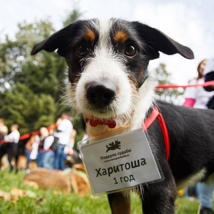 Благотворительная акция в помощь животным – какие бывают и где проводятся