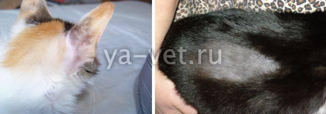 У кошки выпадает шерсть – возможные причины и методы лечения.