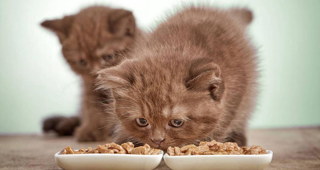 Чем кормить котенка в 4 месяца: состав рациона. как приготовить правильный корм для четырехмесячного котёнка, чего ему давать нельзя