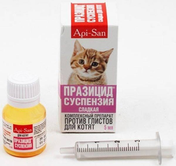 Дегельминтизация кошек: что это такое, зачем и как часто проводят антипаразитарную обработку
