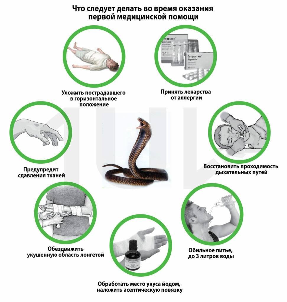 Что делать если собаку укусила змея: опасен ли уж и гадюка