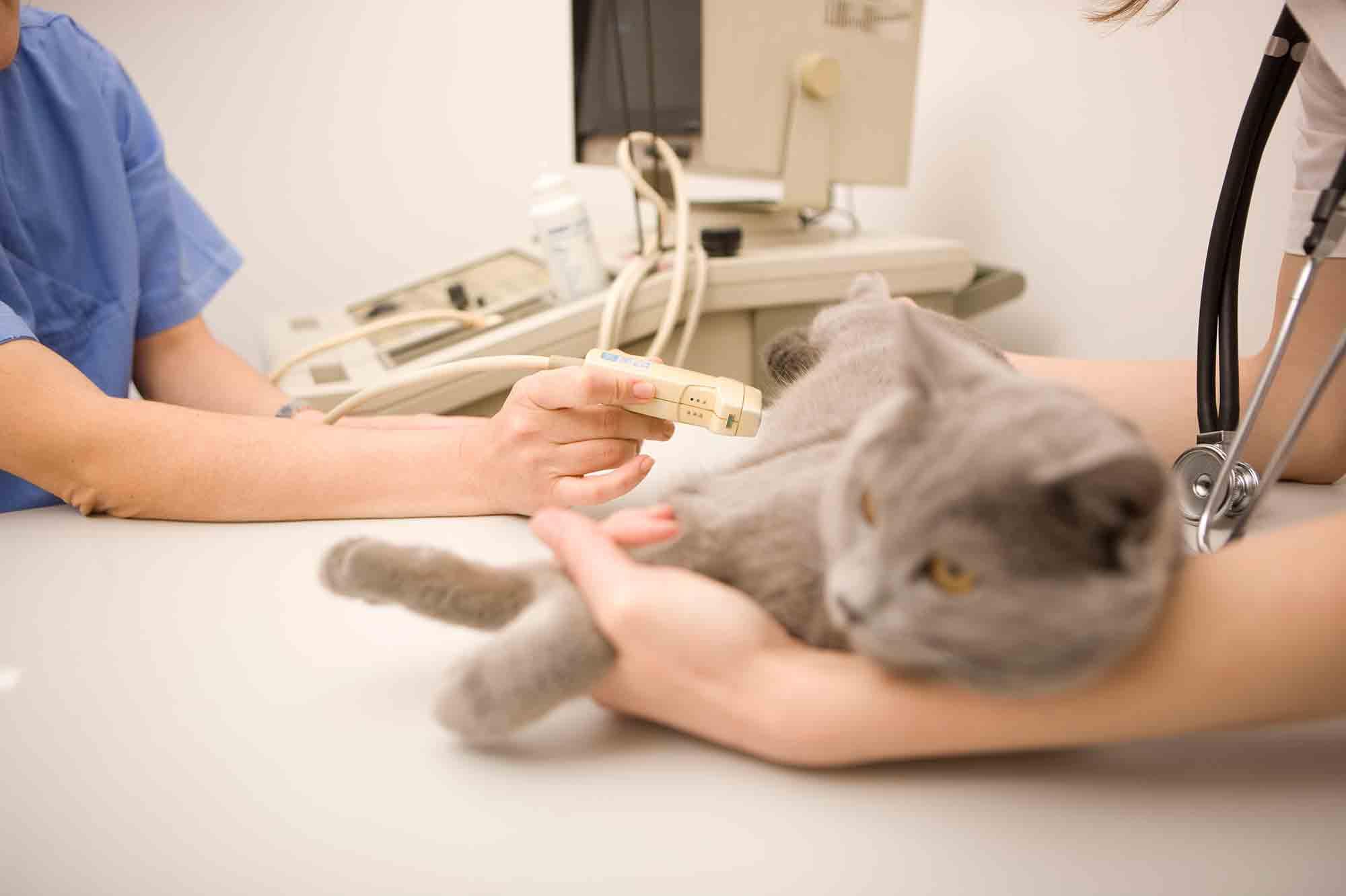 Как усыпить собаку: препараты для эвтаназии, можно ли осуществить процедуру в домашних условиях - kotiko.ru