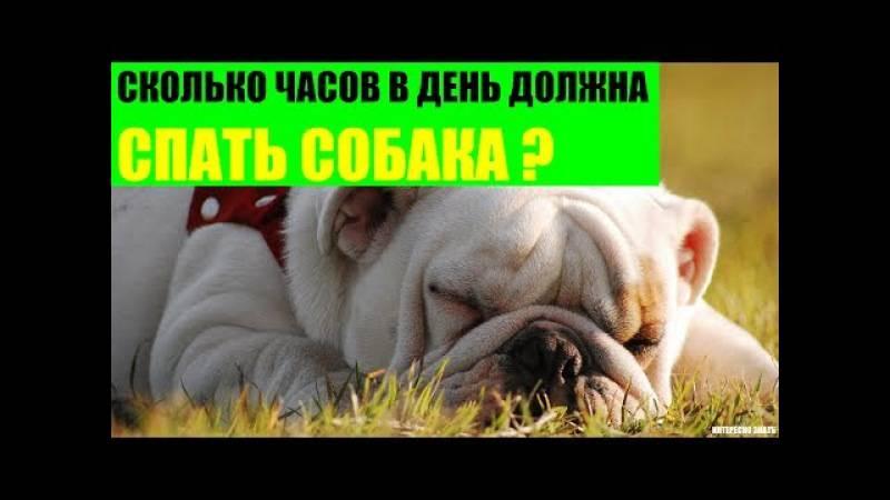 Сколько должен спать щенок в 2 месяца – режим дня собаки