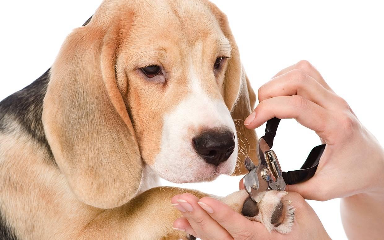 Типы шерсти собак: как ухаживать за собакой? -блог tam.by
