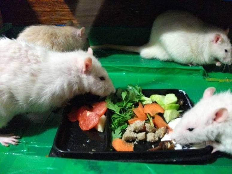 Как ухаживать за мышкой?