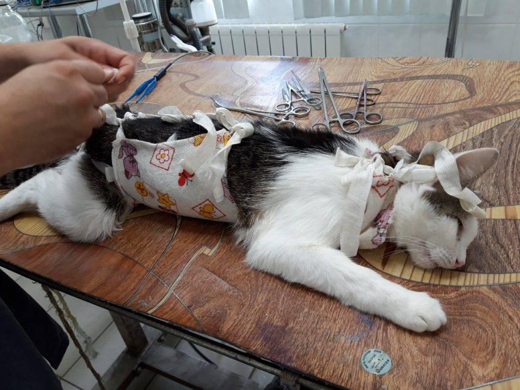 Сколько живут стерилизованные кошки в домашних условиях: отличия в длительности жизни от обычных кошек