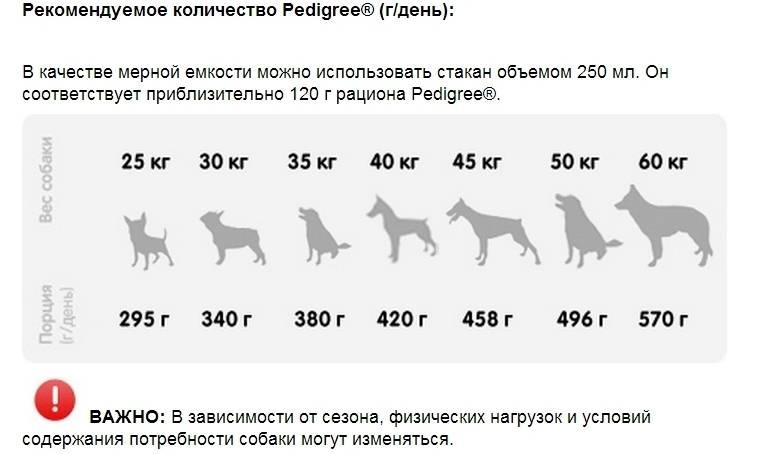 Как и чем кормить щенка алабая: меню по возрастам