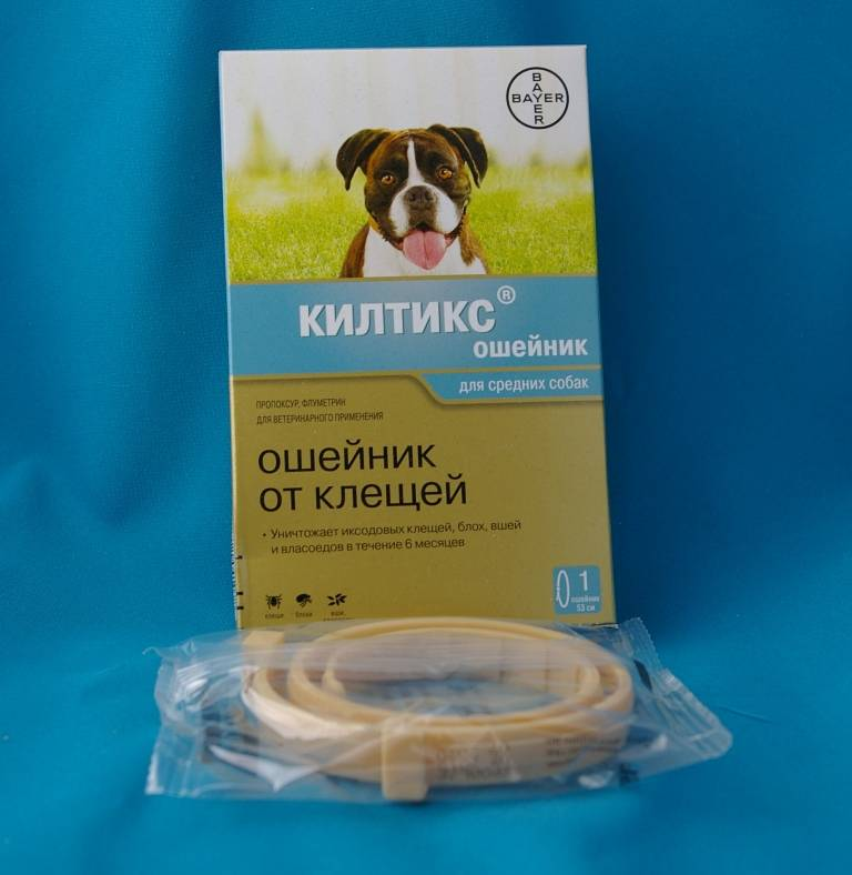 Подробный обзор ошейников от блох и клещей от компании форесто для собаки