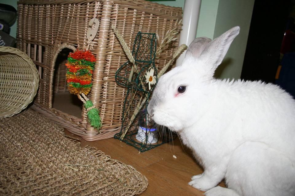 Кролики: современное разведение, выращивание и кормление   cельхозпортал